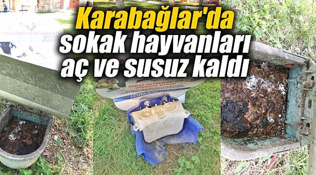 Karabağlar'da sokak hayvanları aç ve susuz kaldı