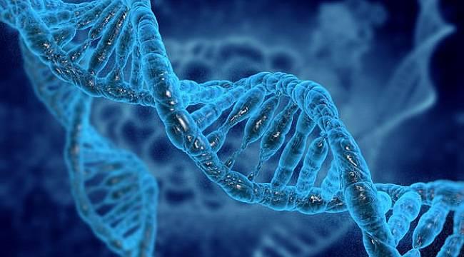Kopan kol ve bacak yeniden çıkabilir... Türk bilim insanının büyük başarısı
