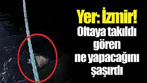 Yer: İzmir! Oltaya takıldı gören ne yapacağını şaşırdı