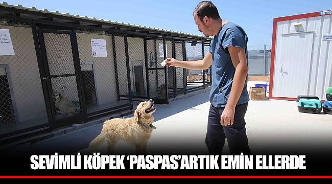 SEVİMLİ KÖPEK 'PASPAS'ARTIK EMİN ELLERDE
