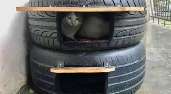 Sokak kedileri için ev