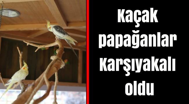 Kaçak papağanlar Karşıyakalı oldu