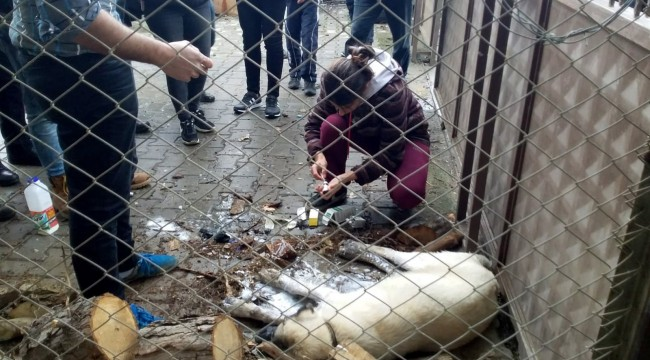 Zehirlenen köpekler için mahalleli seferber oldu