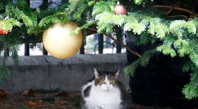 Avustralya, iki milyon başıboş kediyi öldürmek için havadan zehirli sosis atıyor
