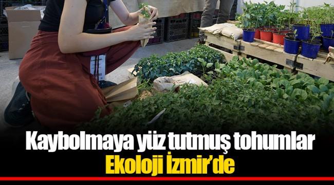 Kaybolmaya yüz tutmuş tohumlar Ekoloji İzmir'de