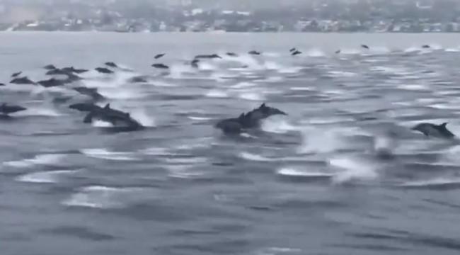 ABD'de kalabalık bir yunus sürüsü balıkçılarla birlikte yüzdü: Onları saatlerce izleyebilirdiniz