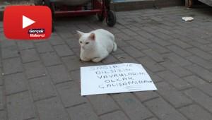 Dilenci kedi!