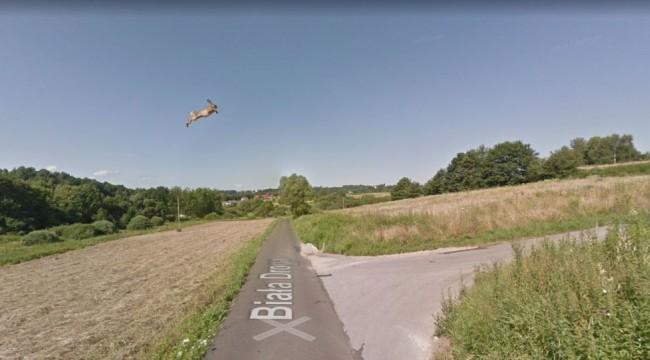 Kullanıcılar fark etti: Google Street View aracı, kayıt sırasında çarptığı tavşanı metrelerce havaya fırlatmış