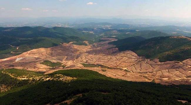 Binlerce ağacın kesildiği Kirazlı'da AKP detayı