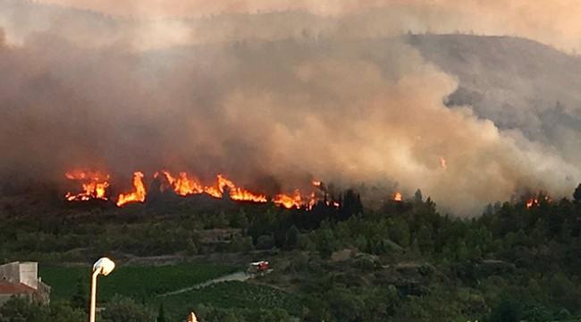 Fransa'da 900 hektarlık ormanlık alan kül oldu