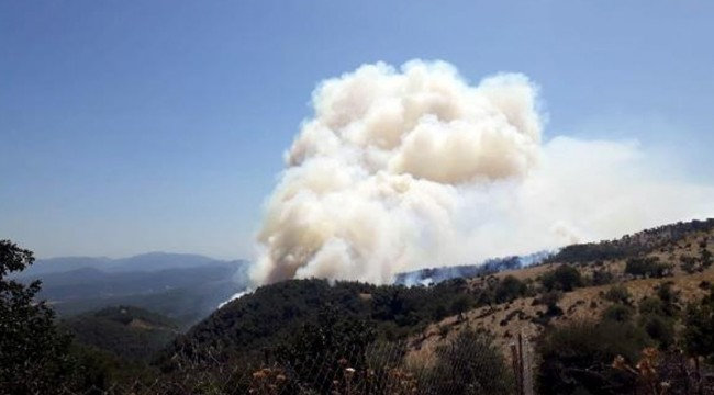 İzmir'de orman yangını çıktı, Bakan Pakdemirli bölgeyi helikopterle inceliyor