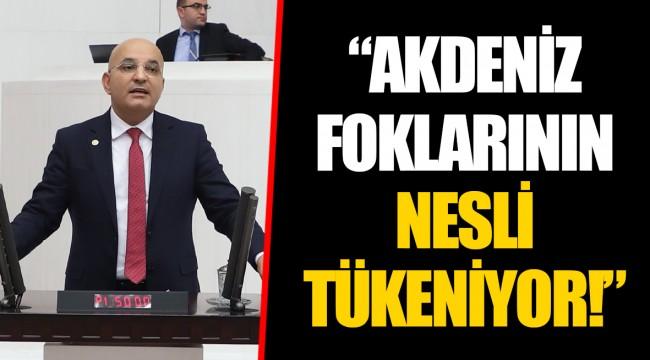 """""""AKDENİZ FOKLARININ NESLİ TÜKENİYOR!"""""""