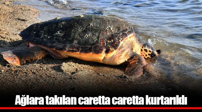 Ağlara takılan caretta caretta kurtarıldı