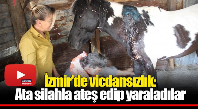 İzmir'de vicdansızlık: Ata silahla ateş edip yaraladılar