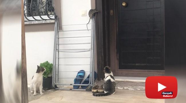 Kedilerden kaçan fare çamaşır asacağında bekledi
