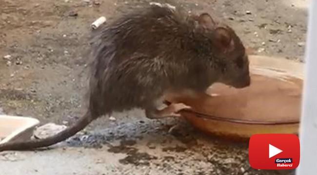 Tabaktan su içen fare, hem düşündürdü, hem de güldürdü