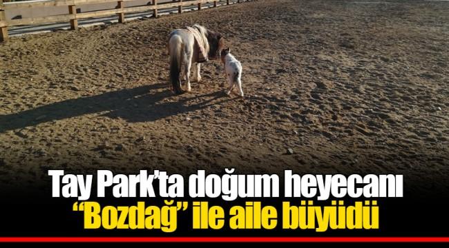 """Tay Park'ta doğum heyecanı  """"Bozdağ"""" ile aile büyüdü"""