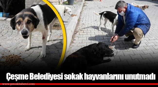 Çeşme Belediyesi sokak hayvanlarını unutmadı