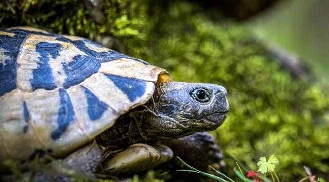 Antalya'daki kaplumbağaları ezip kabuklarını kıran şüpheli yakalandı: Kara büyü olduğu için öldürdüm