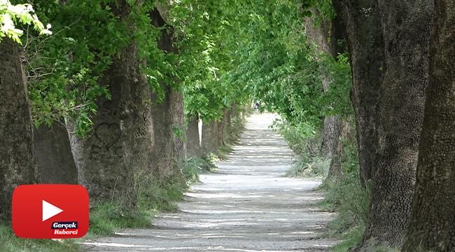 Bu yolda yürümek için Türkiye'nin her yerinden geliyorlar