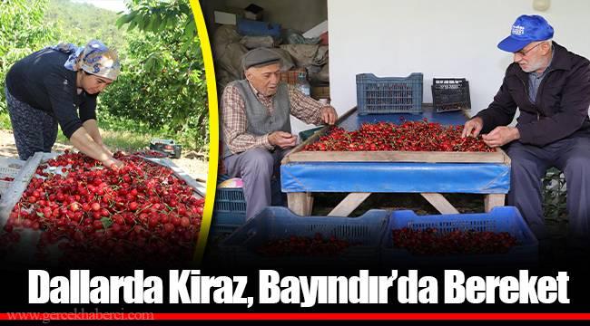 Dallarda Kiraz, Bayındır'da Bereket