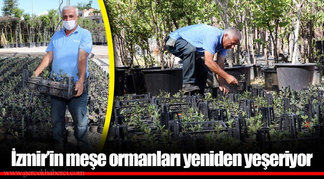 İzmir'in meşe ormanları yeniden yeşeriyor