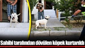 Sahibi tarafından dövülen köpek kurtarıldı