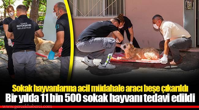 Sokak hayvanlarına acil müdahale aracı beşe çıkarıldı