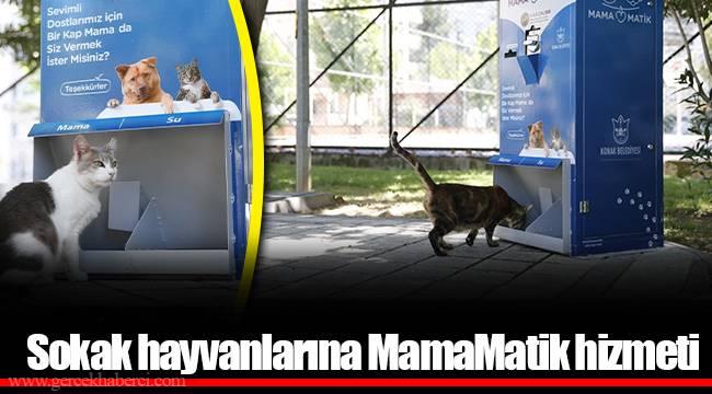 Sokak hayvanlarına MamaMatik hizmeti