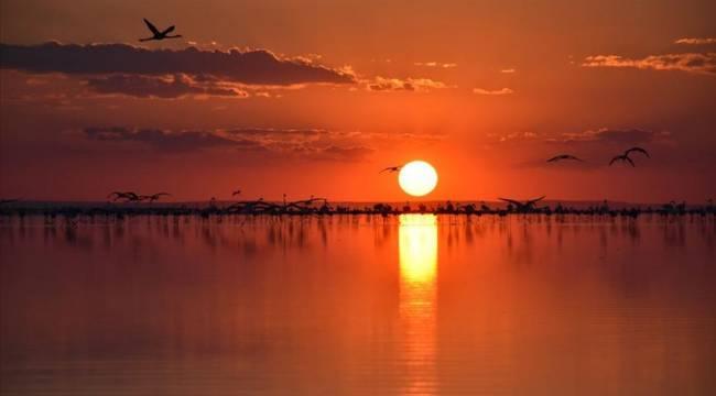 Tuz Gölü nesli tükenmekte olan Bozkır Kartalı ve Toy kuşlarının ev sahibi