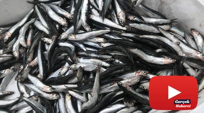 Denizlerdeki hamsi bolluğu fiyatları bir günde yarıya düşürdü
