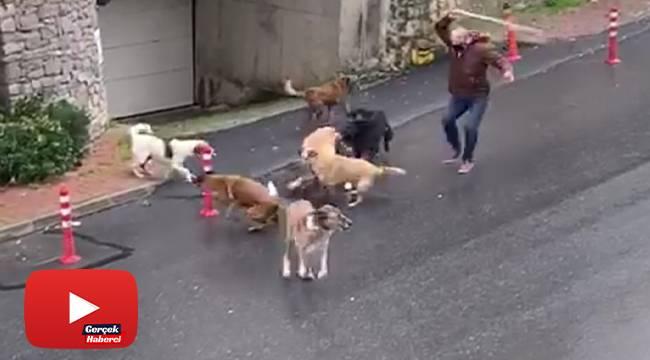 Başıboş köpeklerin mahalleliye korku yaşattığı anlar kamerada