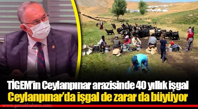 TİGEM'in Ceylanpınar arazisinde 40 yıllık işgal