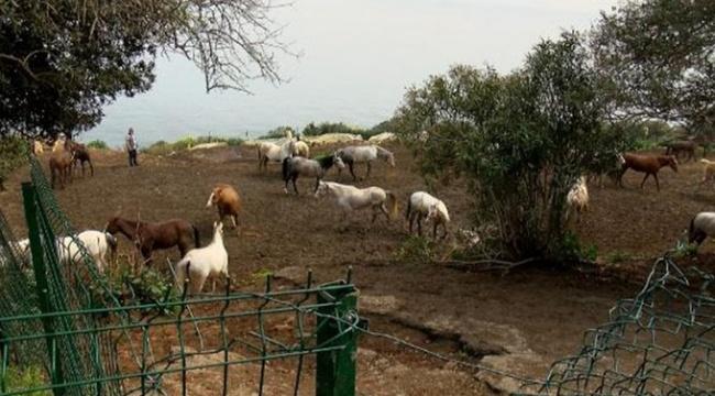 İBB'nin hibe ettiği atların kaybolduğunu bildiren müdürün, memurluktan ihracı istendi