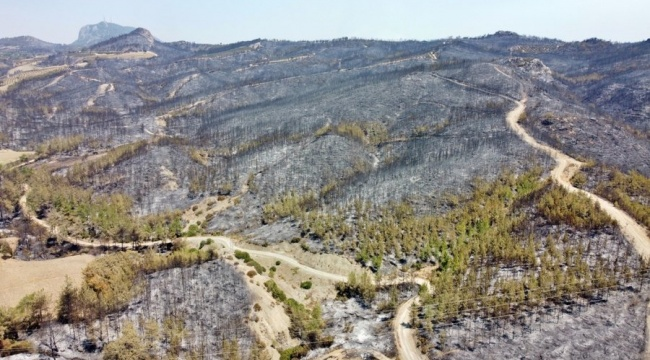 70 orman yangını kontrol altına alındı, 11 yangın devam ediyor